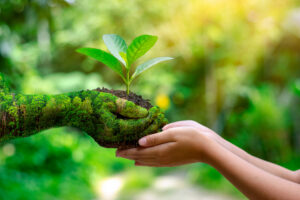environment-earth-day-in-the-hands-of-trees-growing-seedlings