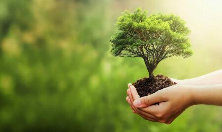 Lahti (Finland) starts its European Green Capital year